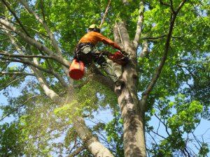 Tree Service Poconos PA